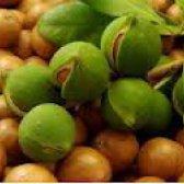 Арганова олія - марокканський секрет ідеальної шкіри