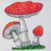 Як намалювати гриби
