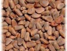 Кедровий горіх - живильні і лікувальні властивості, застосування в народній медицині і цілительство